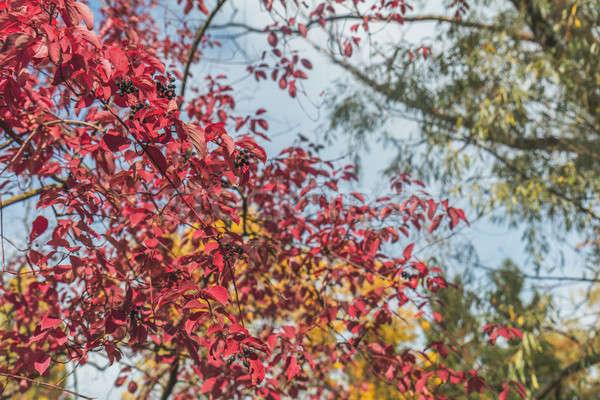 Autumn magic in the city park Stock photo © artsvitlyna
