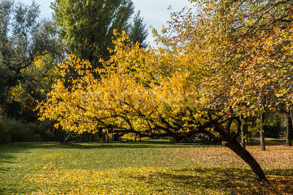 City park in golden autumn Stock photo © artsvitlyna