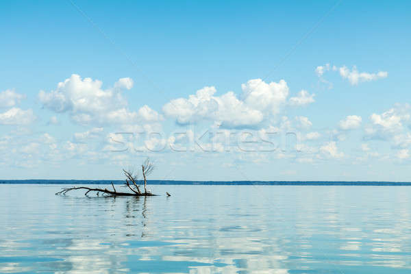 Blue sky with light white clouds over river surface Stock photo © artsvitlyna