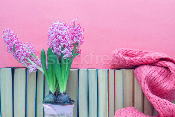 Pink hyacinths in pot infront of pile of books at pink backgroun Stock photo © artsvitlyna