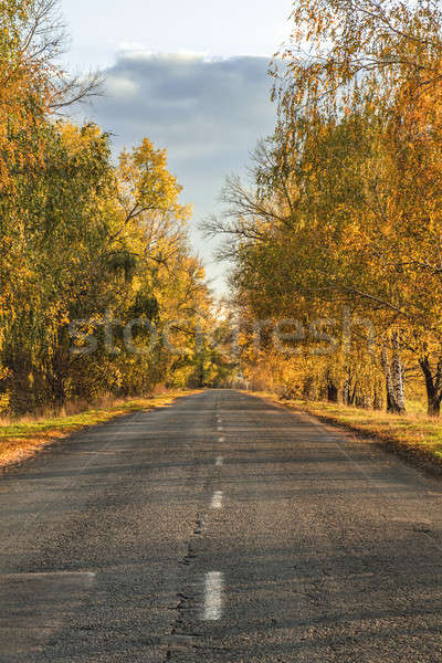 Autumn road along winter wheat fields Stock photo © artsvitlyna