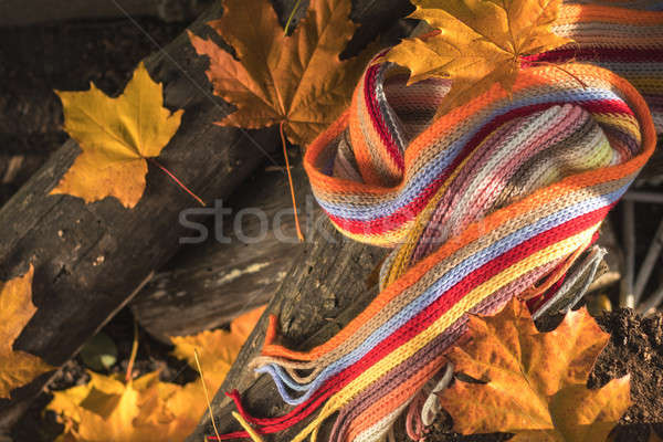 Multicolored scarf and yellow maple and oak leaves on the logs.  Stock photo © artsvitlyna