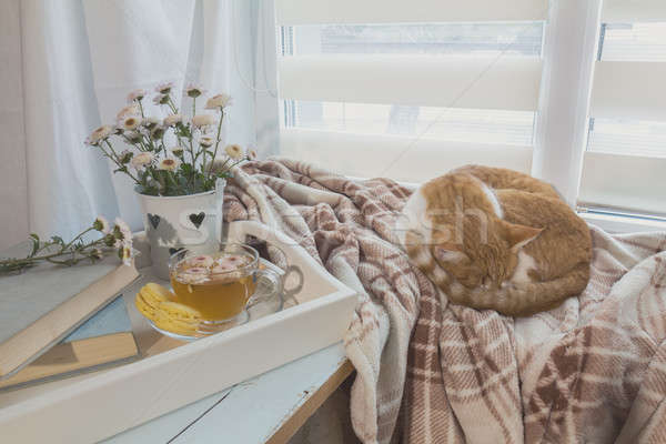 Sweet home with flowers, tea and a cat Stock photo © artsvitlyna