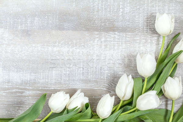 Many white tulips on light wooden surface Stock photo © artsvitlyna