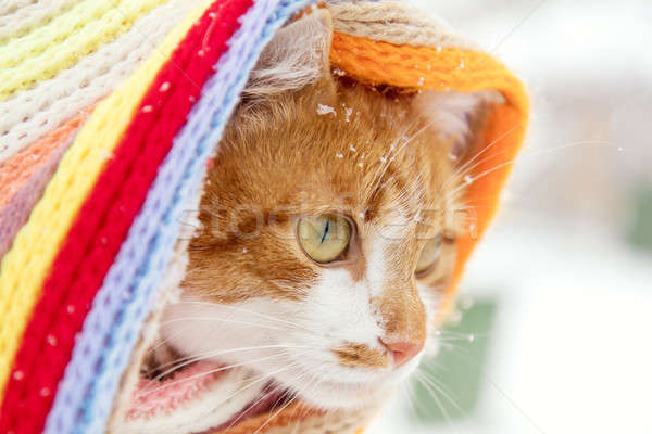 Stock photo: Red and white kitty cat in checkered scarf