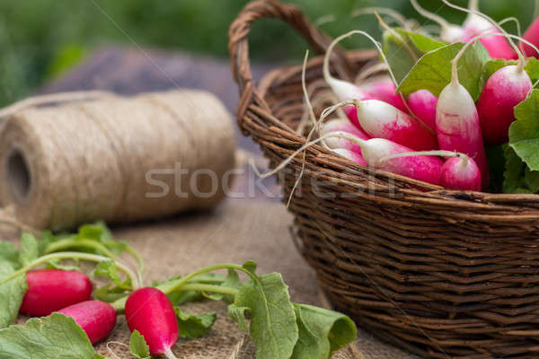 Stock photo: Bunch of fresh radishes in a wicker basket outdoors on the table