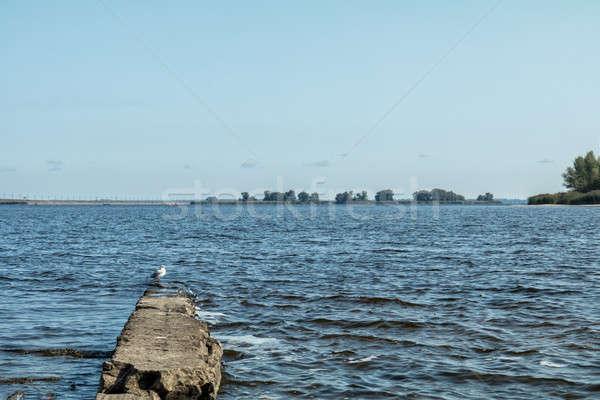 Stock photo: Amazing river landscape whits larus herring gull