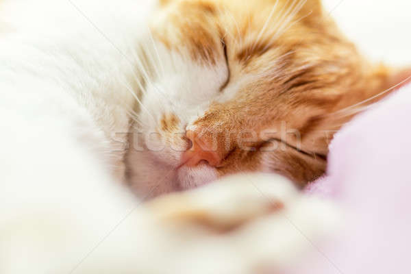 Red-and-white kitty's sleepy face Stock photo © artsvitlyna