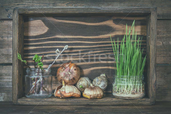 Gardening and planting concept. Seedlings, garden tools, tubers  Stock photo © artsvitlyna