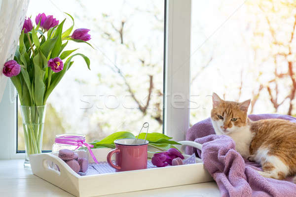 Stock photo: Violet sunshine cozy home concept