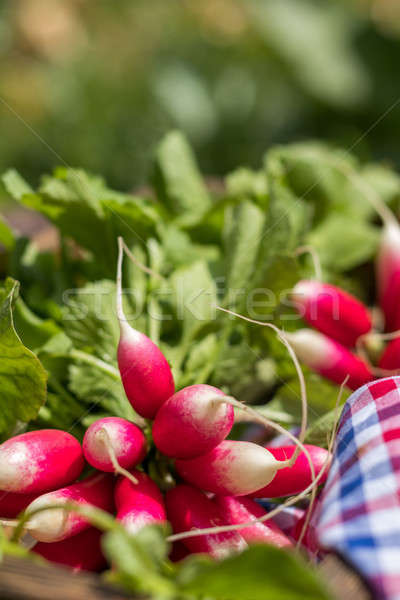 Stock photo: Bunch of fresh radishes in a wooden box outdoors on the table. B