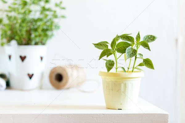 Spring gardening light concept Stock photo © artsvitlyna