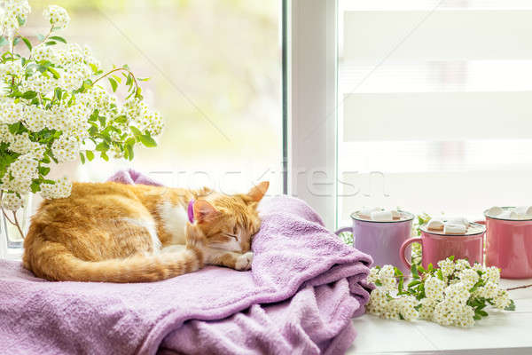 Kitty on the windowsill, cups of hot cocoa Stock photo © artsvitlyna