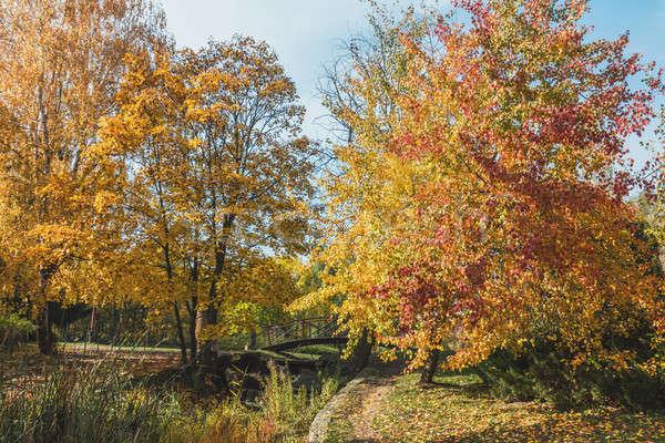 City park footpath in golden autumn Stock photo © artsvitlyna