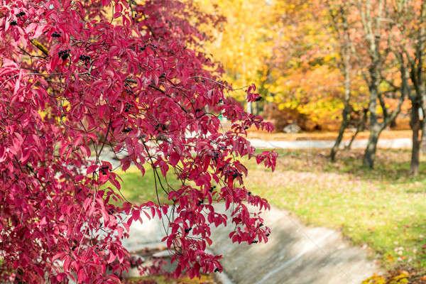 Sonbahar büyü şehir park yaprakları parlak Stok fotoğraf © artsvitlyna