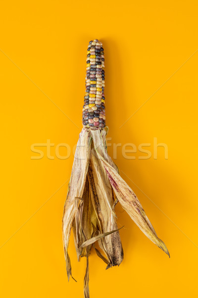 Stock photo: Cheerful and Colorful dried Indian Corn on yellow surface
