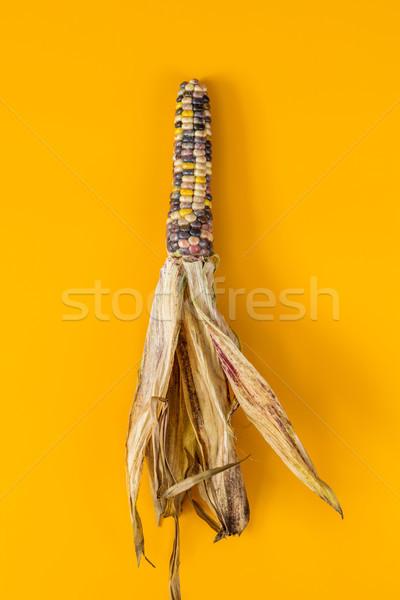Alegre colorido secas indiano milho amarelo Foto stock © artsvitlyna