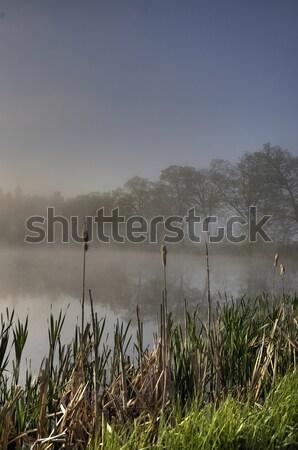 ストックフォト: 田園風景 · 日没 · 草 · 夏 · ファーム · 風