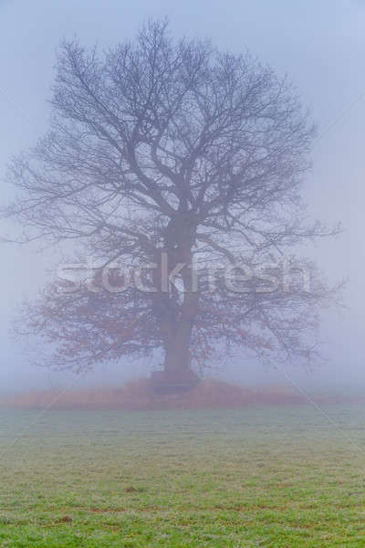 cold misty morning with tree Stock photo © artush