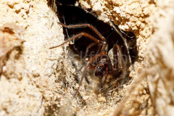 Jardin araignée famille attente victime macro Photo stock © artush