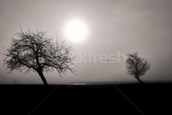 Misty silhouette due alberi bianco nero panorama Foto d'archivio © artush