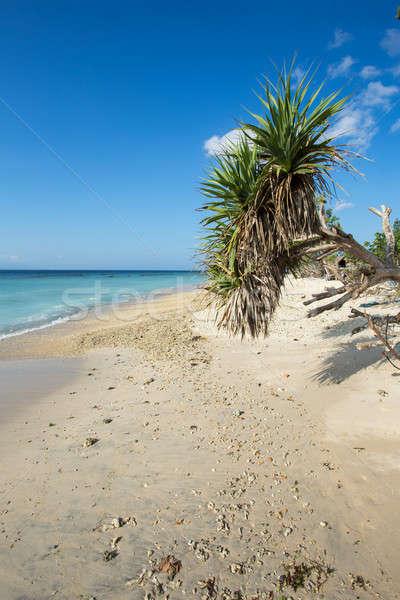 Rüya plaj bali Endonezya ada mavi gökyüzü Stok fotoğraf © artush