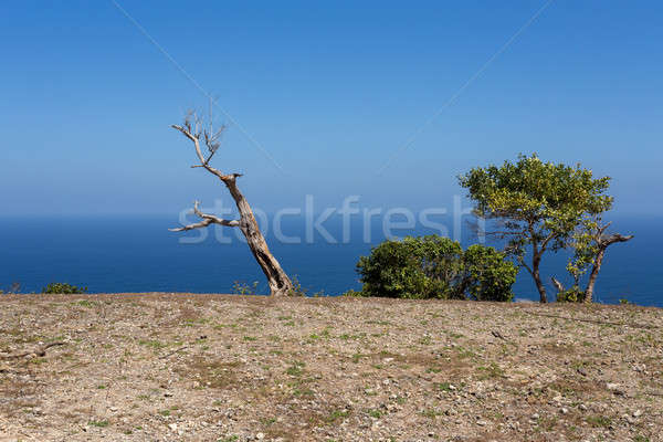 Toter Baum Punkt Tauchen Stelle Insel Stock foto © artush