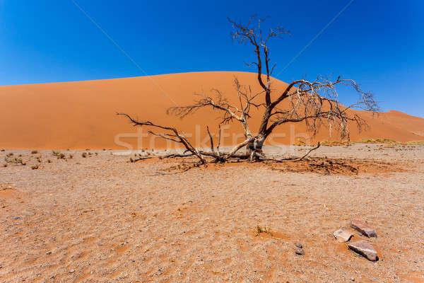 Düne Namibia toter Baum besten Landschaft Sonne Stock foto © artush