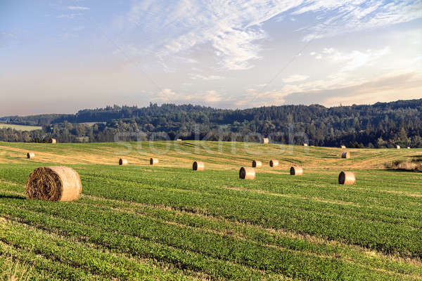 harvested field with straw bales in summer Stock photo © artush