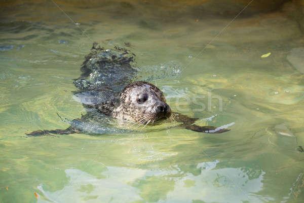 Portré fiatal kikötő fóka víz mosoly Stock fotó © artush
