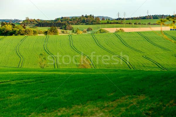 Beautiful green sping rural landscape Stock photo © artush