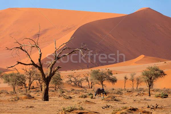 Halott tájkép Namíbia Afrika gyönyörű reggel Stock fotó © artush