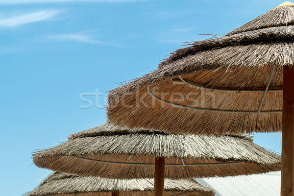 reed sunshades Stock photo © artush