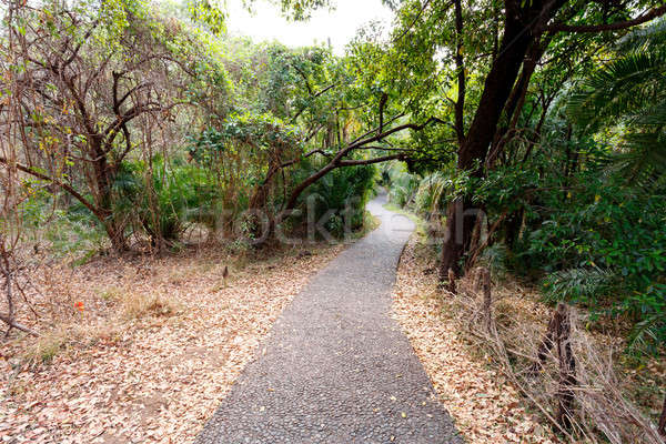 Pathway in a Park Victoria Falls, Zimbabwe in Spring Stock photo © artush