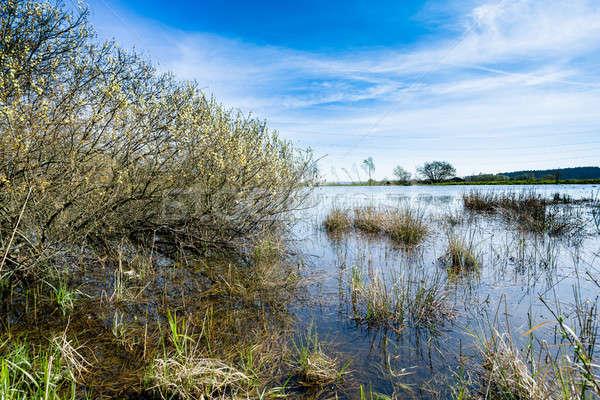 Stagno primavera cielo blu scena rurale panorama bellezza Foto d'archivio © artush