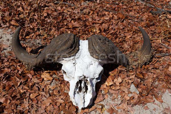 череп дельта пейзаж круга жизни регион Сток-фото © artush