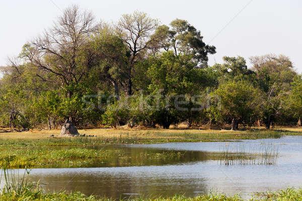 Gioco riserva panorama bella delta Botswana Foto d'archivio © artush