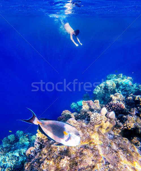 Korall hal Vörös-tenger Egyiptom elöl snorkeling Stock fotó © artush