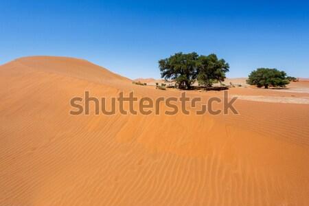 Piękna krajobraz ukryty pustyni Świt martwych Zdjęcia stock © artush