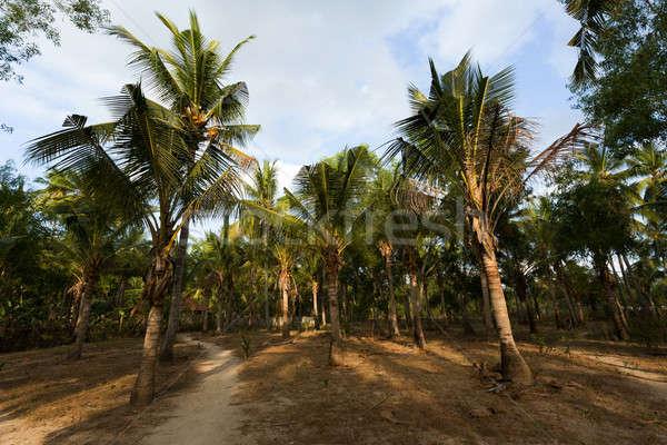 Ağaç forrest bali Endonezya mavi gökyüzü plaj Stok fotoğraf © artush