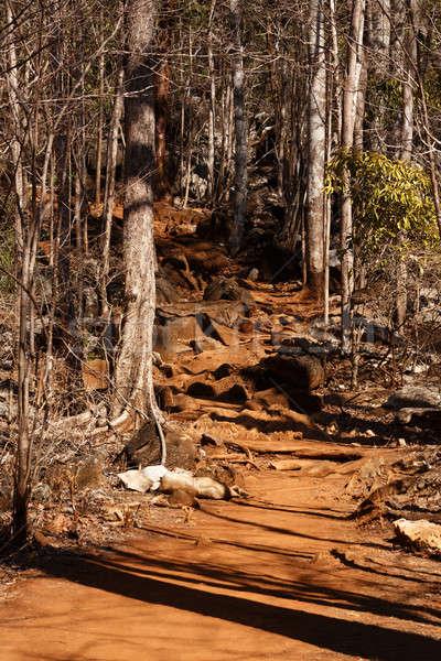 Secar floresta reserva parque árvore Foto stock © artush