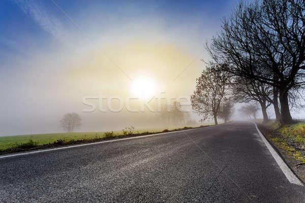 сельский туманный дороги Восход дерево Сток-фото © artush