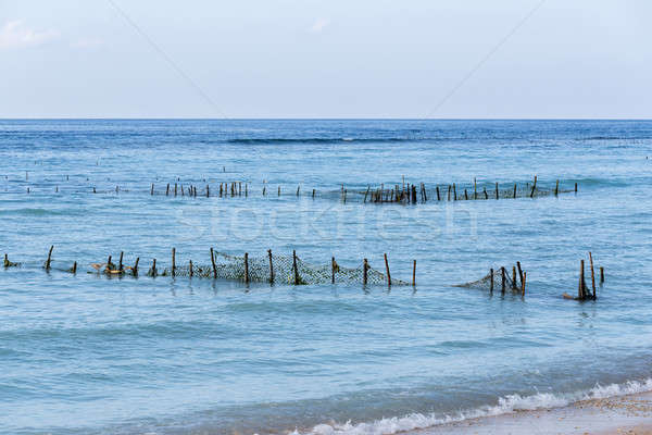 Plantations of seaweed on dream beach, Algae at low tide Stock photo © artush