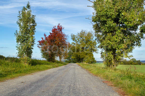 Road in the autumn with yellow trees Stock photo © artush