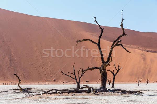 美しい 風景 隠された 砂漠 日の出 死んだ ストックフォト © artush