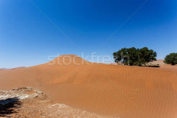 Belo nascer do sol paisagem escondido morto blue sky Foto stock © artush