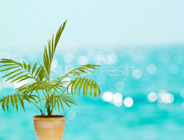 Tropicales Palm pot bleu bokeh arbre Photo stock © artush