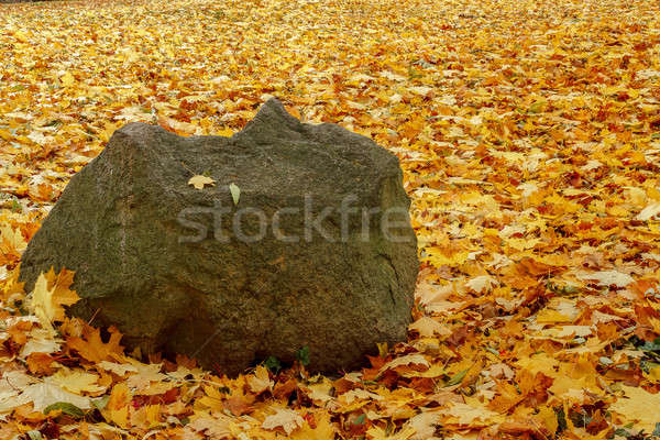 orange red and green leaves and boulder Stock photo © artush