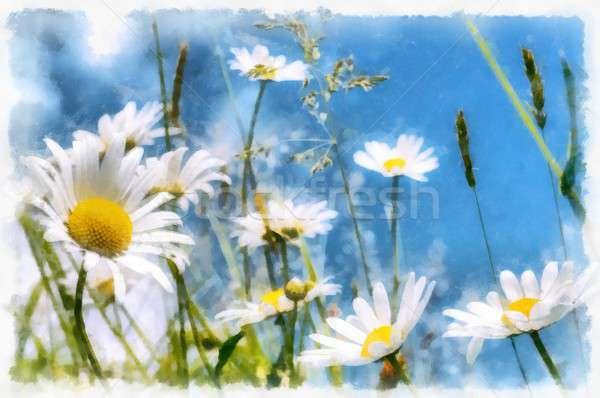 Printemps Daisy champ de fleurs vintage effet couleur pour aquarelle Photo stock © artush