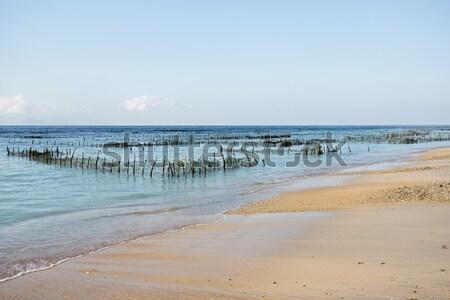 Wodorost sen plaży niski fala bali Zdjęcia stock © artush